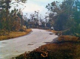 Forest Trail after Hugo
